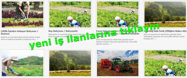 Çiftlik iş ilanları, çiftlik elemanı hayvan bakıcısı, besi çiftlikleri iş ilanı, çiftlikte çalışmak isteyen